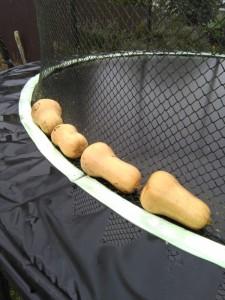 butternuts 1